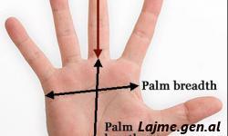 Çdo gisht tregon nje organ. Zbulojini